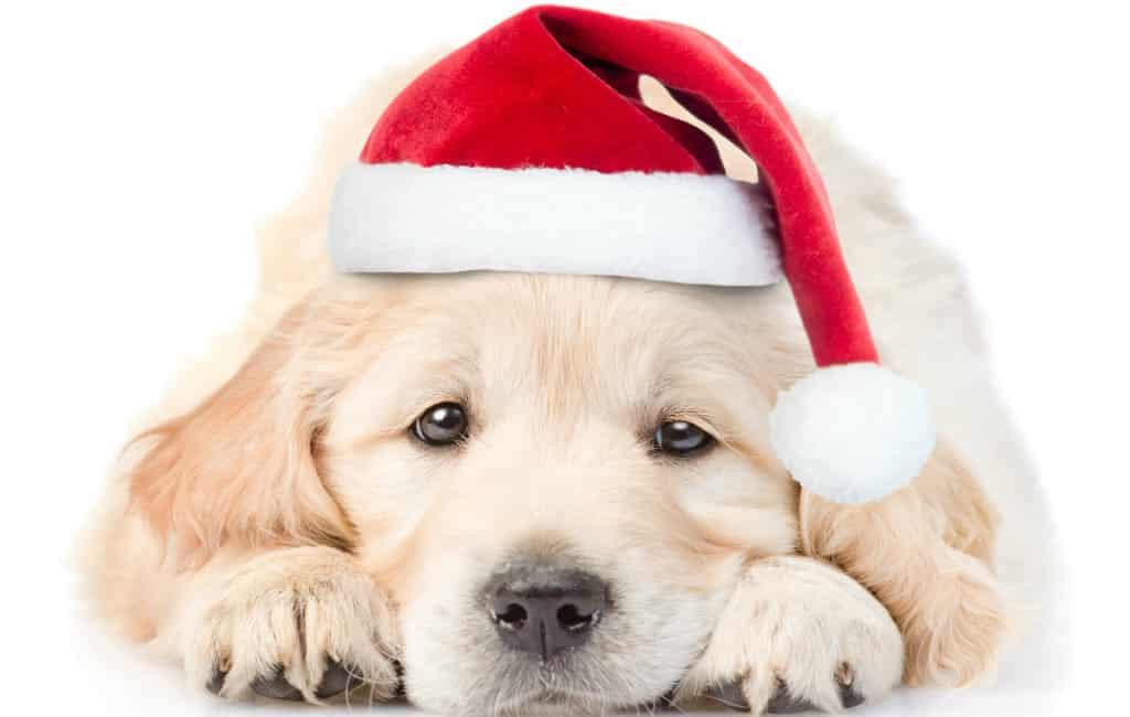 Kerstmis komt eraan dus pas op met aanschaffen van huisdier via internet in Spanje