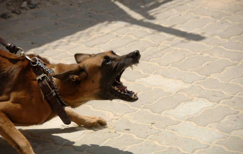 Hond valt man aan die vrouw mishandelde in Tarragona