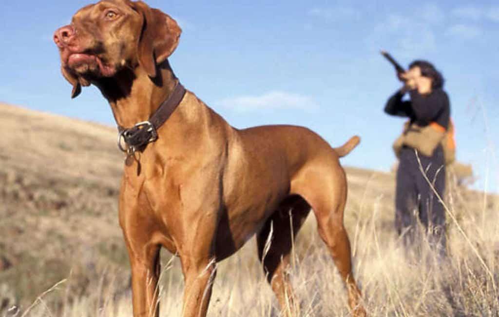 Verontwaardiging vanwege jagershonden en hert die in ravijn vallen in Málaga