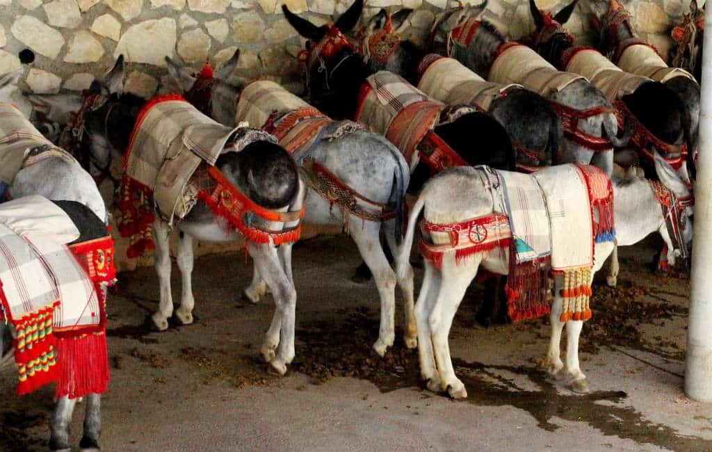 Dood ezel zorgt opnieuw voor problemen met ezel-taxi's in Mijas