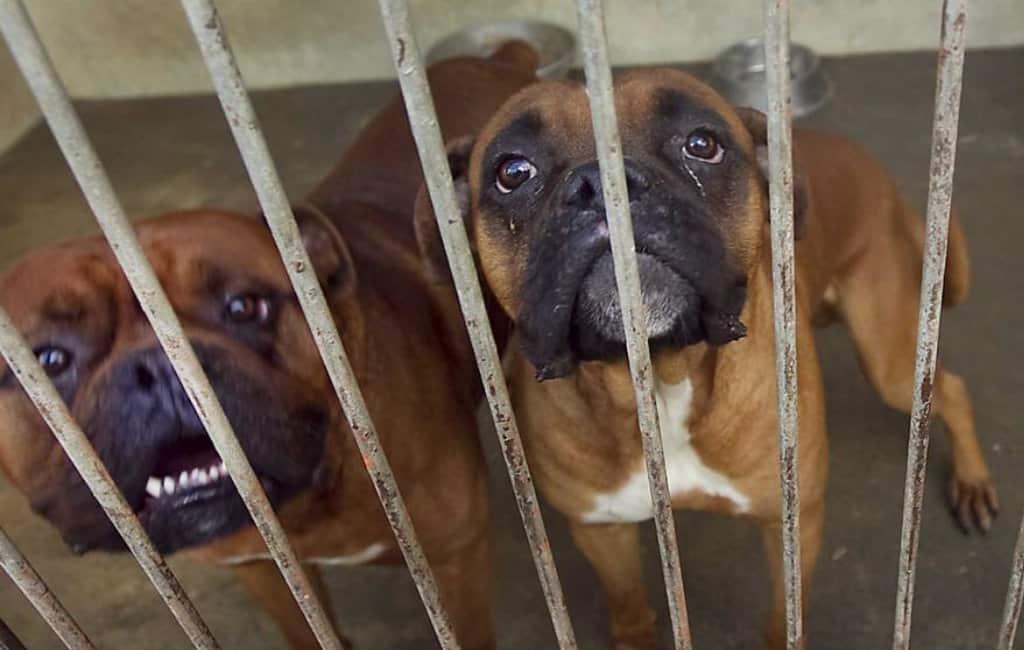 Vier maanden celstraf voor het verdrinken van honden in Spanje