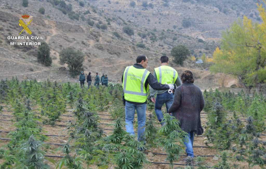 Nederlandse drugshandelaren zoeken wietkwekers provincie Málaga