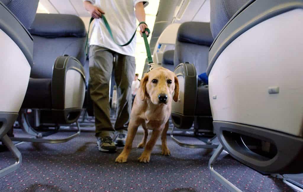 KLM weigert in Bilbao passagier met geleidehond mee te nemen