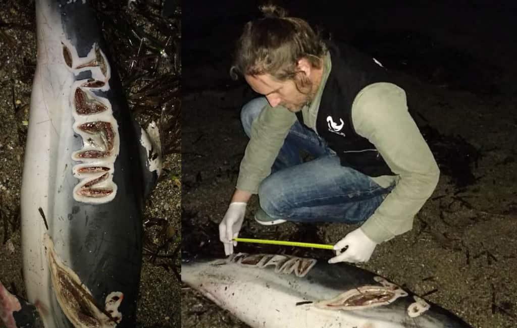 Dode dolfijn met een naam op het lichaam geschreven gevonden in Almería