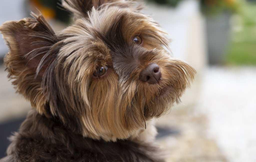 Oma krijgt celstraf vanwege hond schoppende kleinzoon
