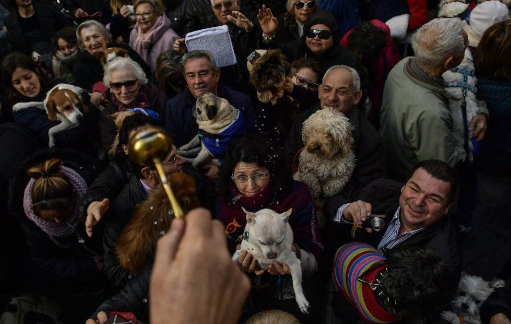 San Antonio Abad: de dag van de dieren in de kerk in Spanje