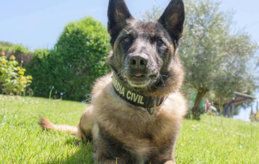 Speurhond Elton van de Guardia Civil gaat met pensioen