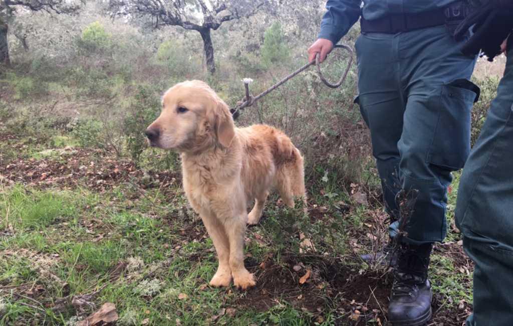 Hond na twee maanden levend uit put gehaald in Córdoba