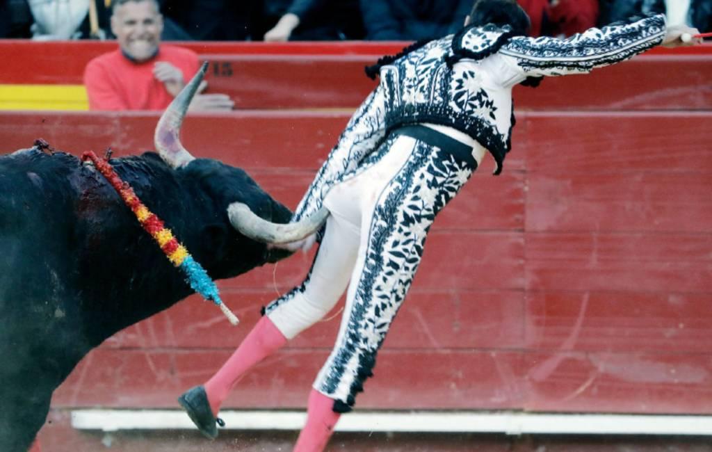 Stierenvechter wordt op de horens genomen in Valencia