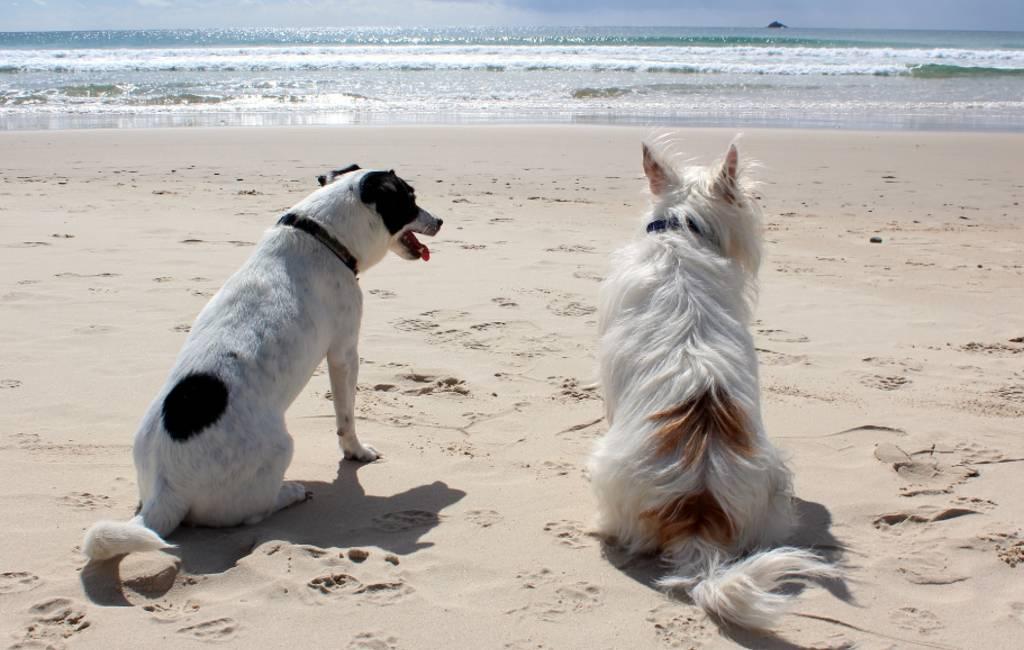 Honden niet meer welkom op de stranden in Spanje