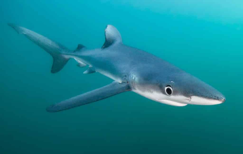 Kleine haai gezien in haven Cambrils (video)