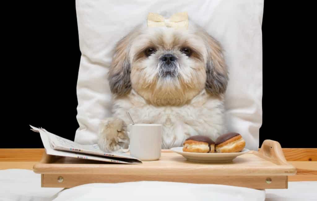 150 euro per nacht om met je hond in dit luxe hotel op Mallorca te slapen