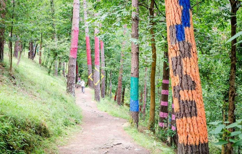 Zieke dennenbomen zorgen voor sluiting Bosque de Oma in Baskenland