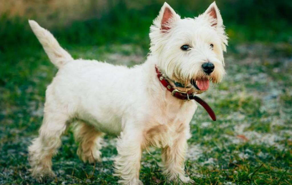 Rechter bepaalt voogdij hond in Spanje