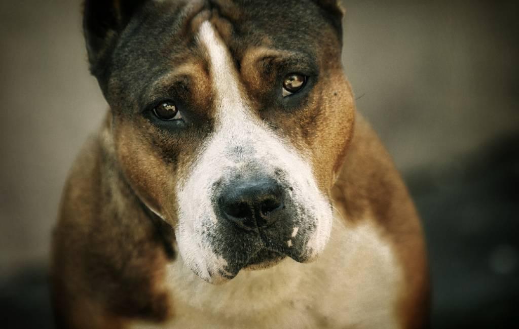 Rechter op Tenerife roept hond op als getuige in dierenmishandeling zaak