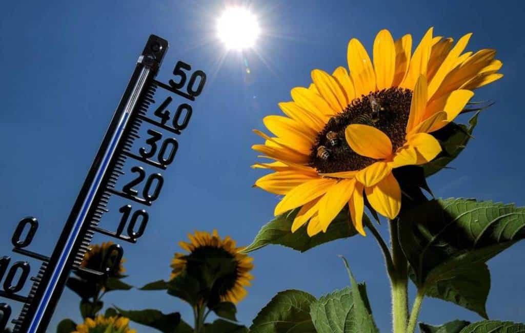 Warme Afrikaanse lucht laat temperaturen Spanje stijgen tot 37 graden