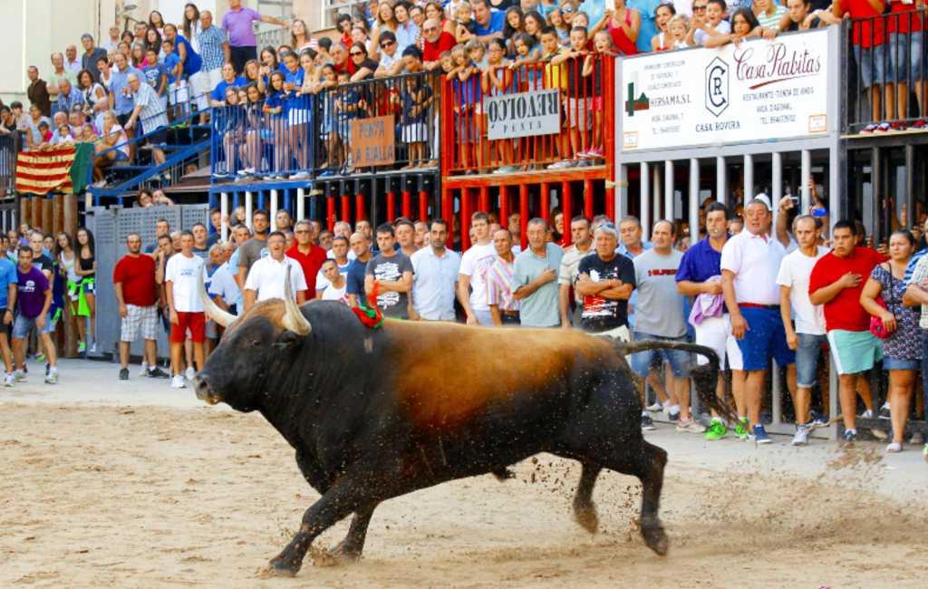 Andere regioregering Valencia maar hetzelfde dierenleed met stieren