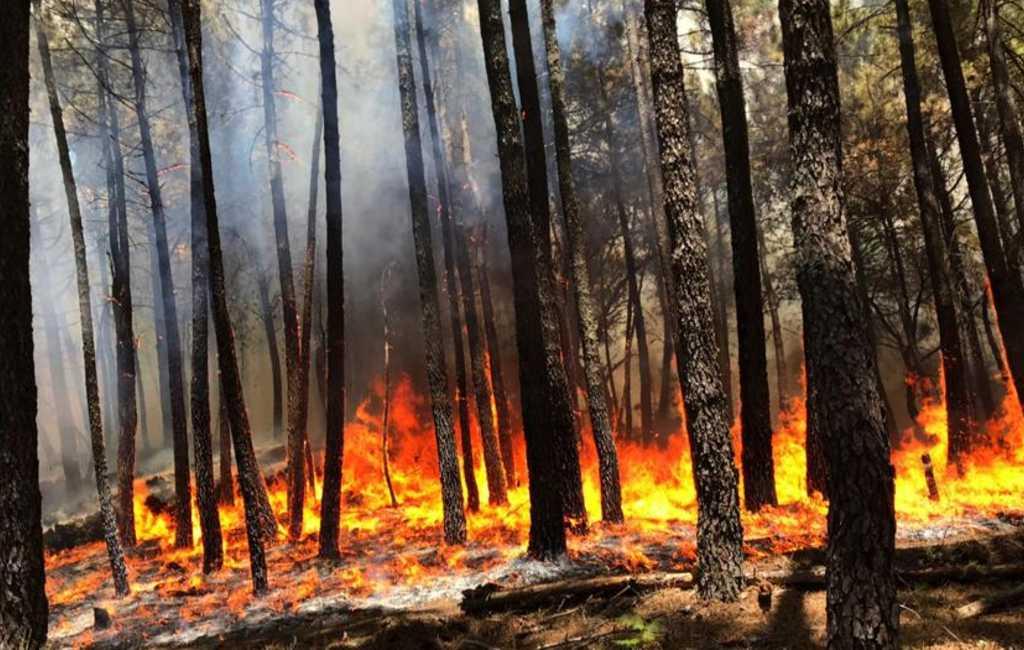 Duizenden hectare natuur verwoest door bosbranden in Spanje