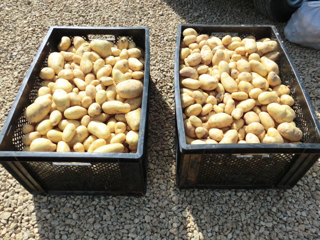Nederlander doneert 3.000 kilo aardappelen aan families in Javea