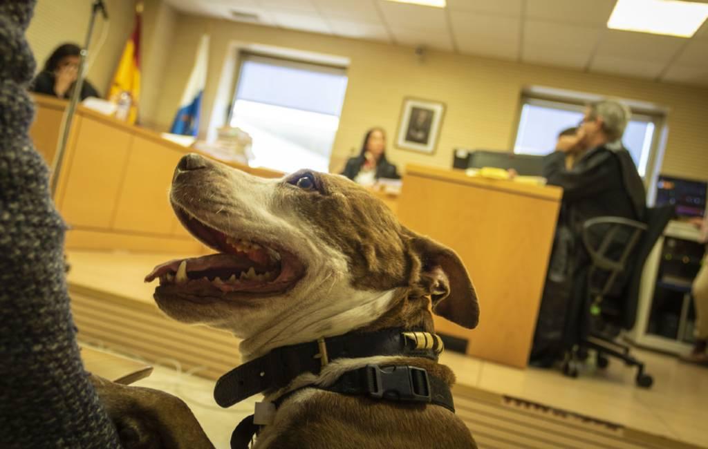 Één jaar celstraf mishandelaar na getuigenis hond op Tenerife