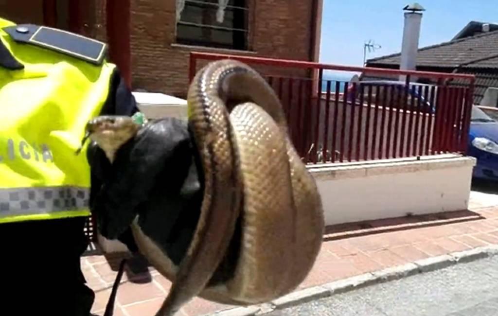 Drie niet giftige slangen gevangen in Málaga
