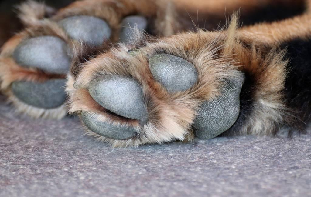 De vijf seconden regel wat betreft honden en heet asfalt in Spanje