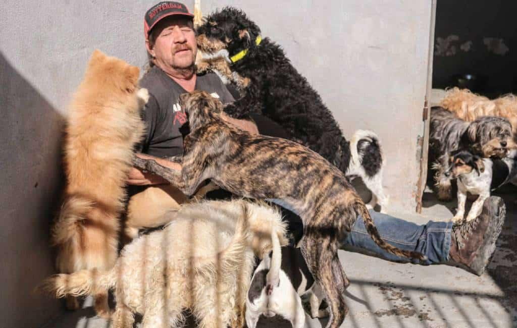 Redt de honden in Nederlands hondenasiel Cádiz
