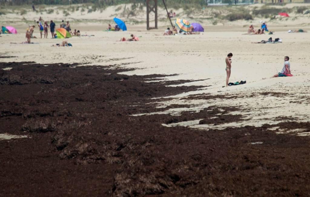 Aziatische zeewier bedreigt kust in Andalusië
