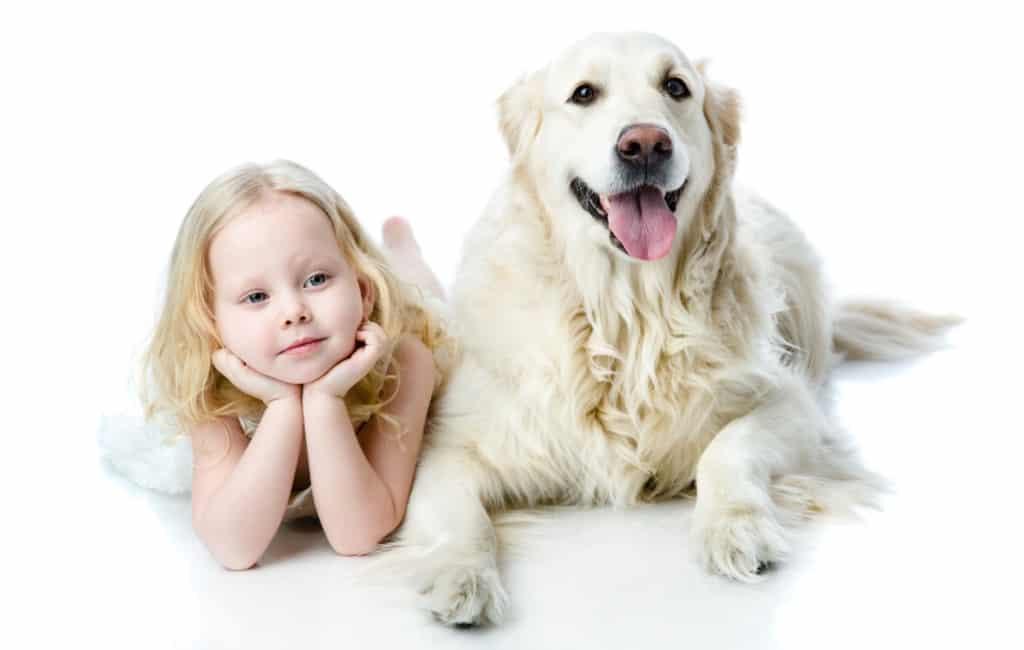 Meer honden dan kinderen in de Baskische stad Vitoria