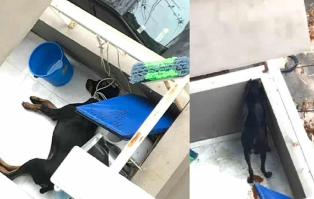 Politie arresteert vrouw vanwege vastbinden hond op oververhit balkon