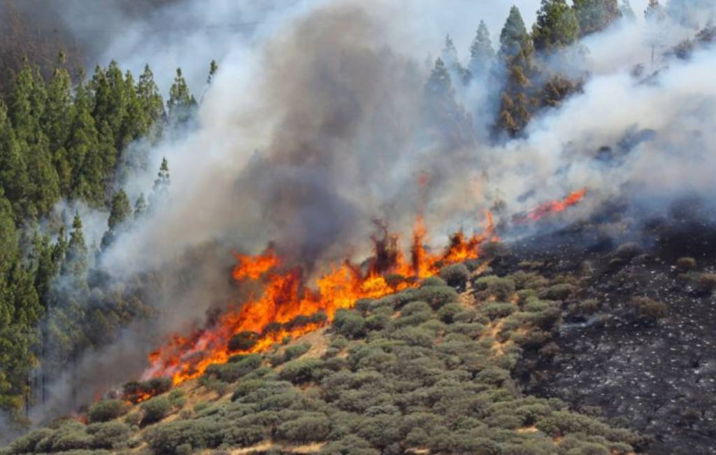 Opnieuw grote bosbrand op Gran Canaria met 2.000 evacués