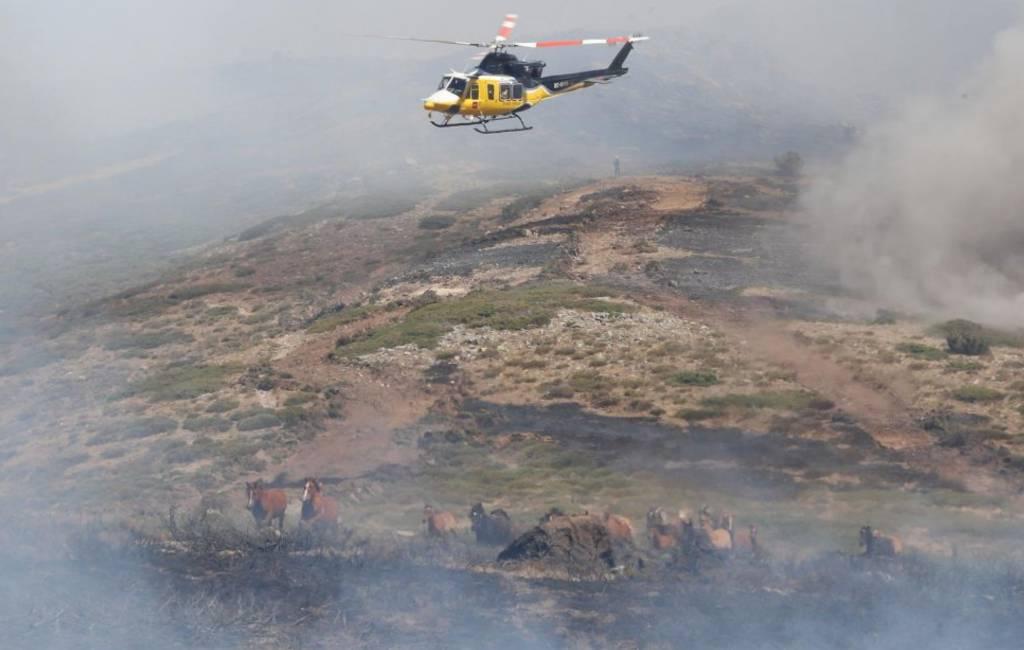 Helikopterpiloot brandweer voorkomt dood van 27 paarden in Segovia