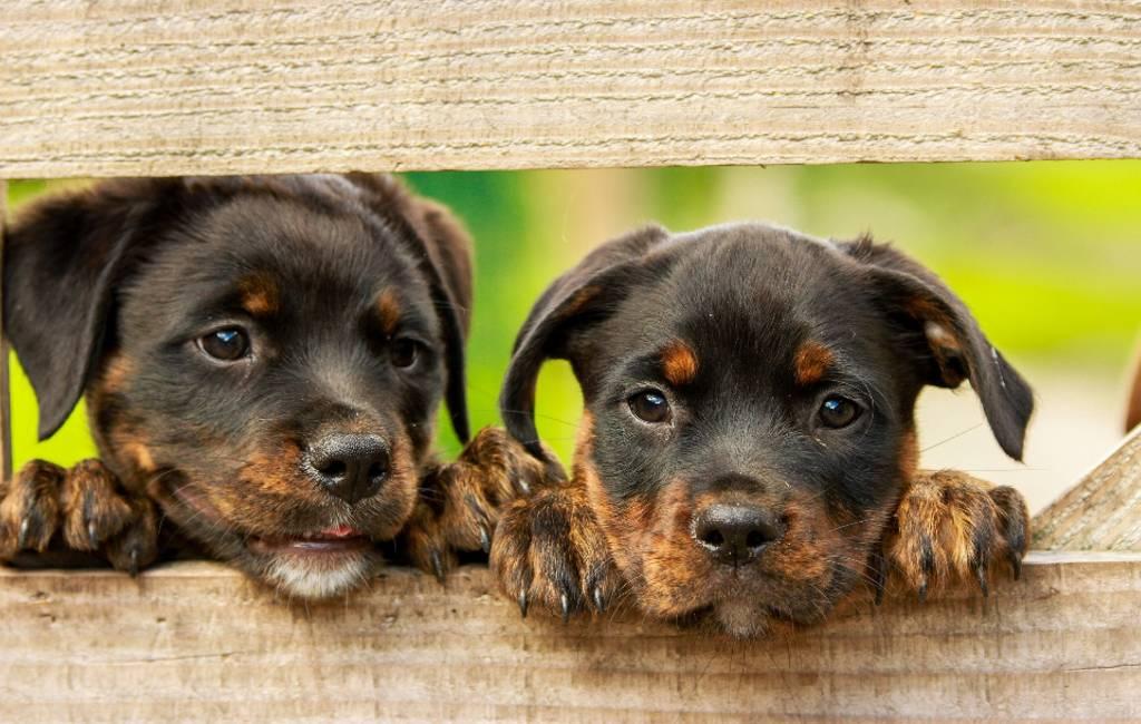 Nieuwe landelijke zoekwebsite voor adoptie huisdieren in Spanje