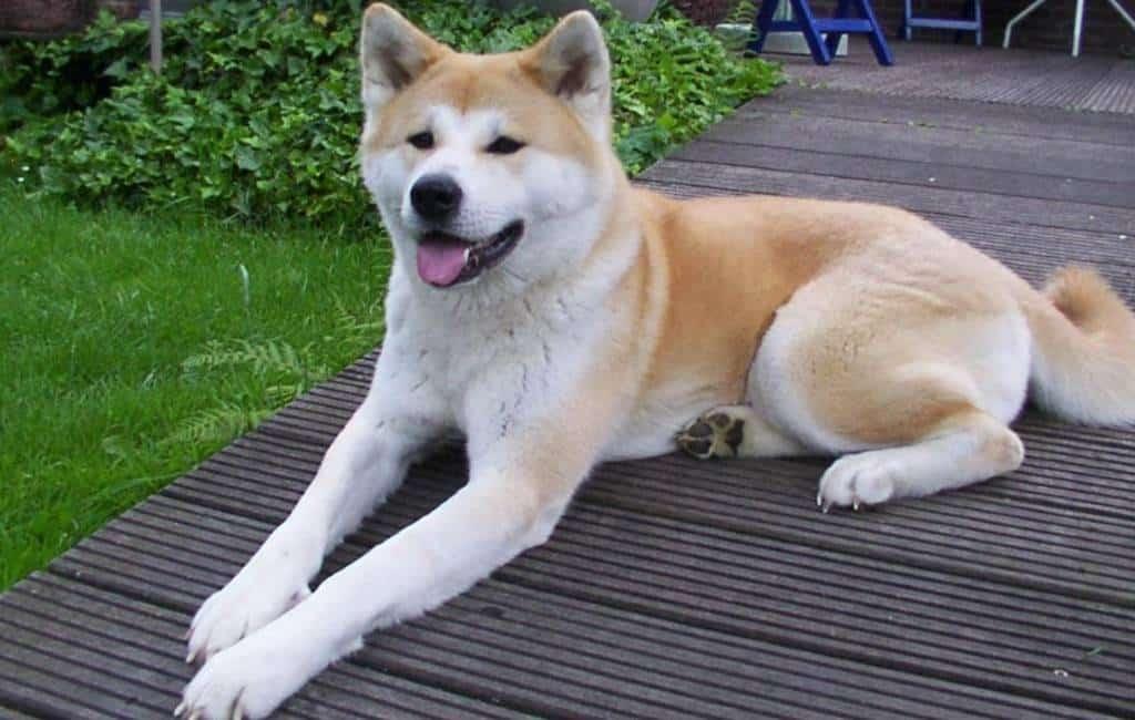 Hond valt eigen familie aan nabij Barcelona