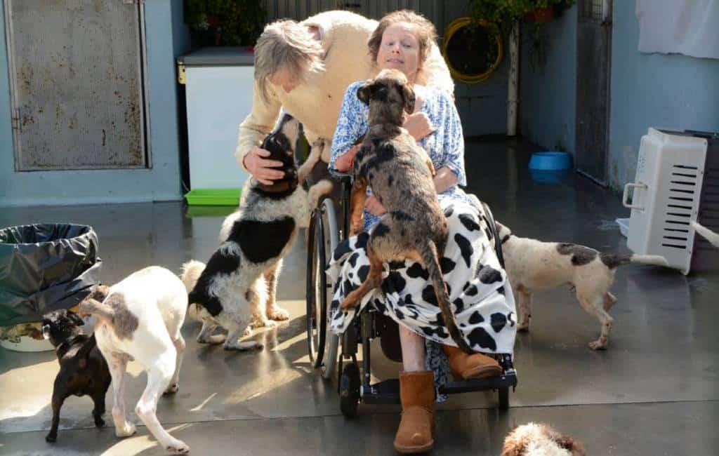 Het verhaal van een Nederlands stel, een ongeluk en 11 honden in Galicië