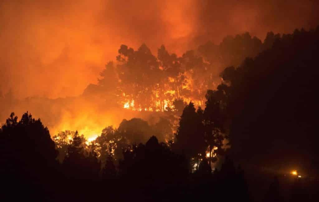 Bosbrand Gran Canaria zorgt voor natuurramp met 6.000 ha verwoest