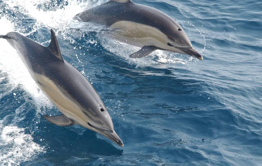 Het geluk van de Spaanse zanger David Bisbal: dolfijnen bij Almería