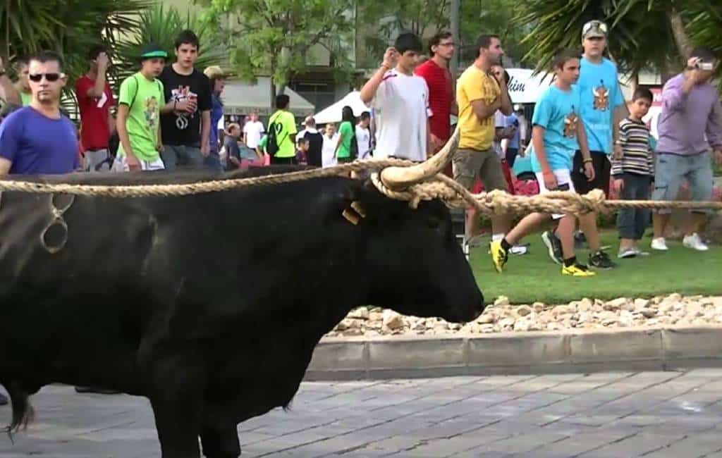 Vastgebonden stier valt auto en scooter aan in provincie Tarragona