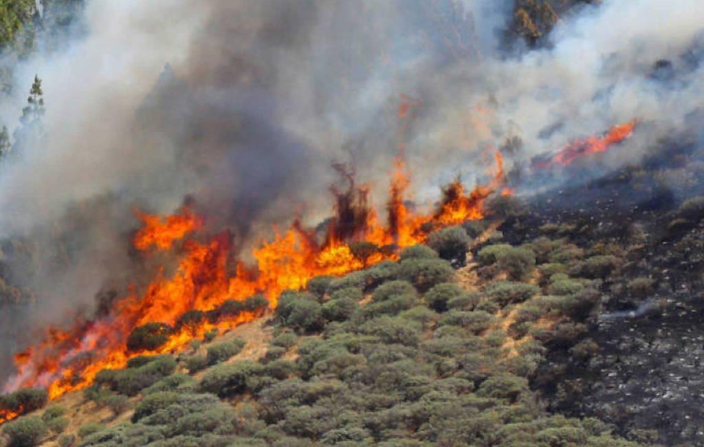 Veroorzaker bosbrand Gran Canaria aangehouden