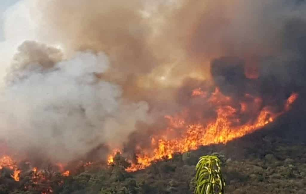 144 evacués bij natuurbrand Estepona aan de Costa del Sol (UPDATE)