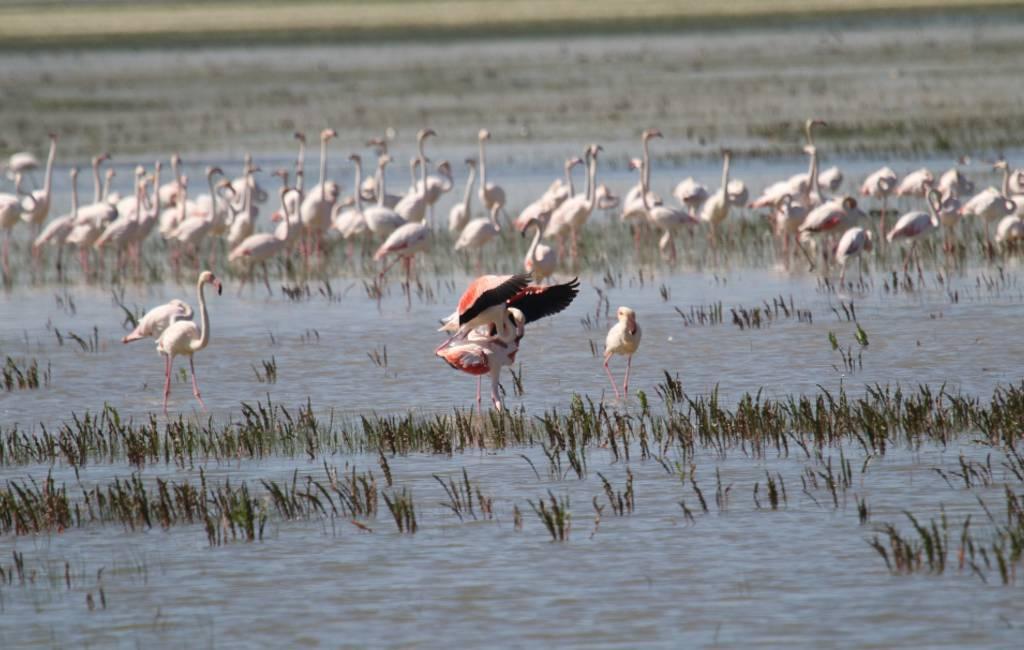 Nationaal Park Doñana in Andalusië bestaat 50 jaar