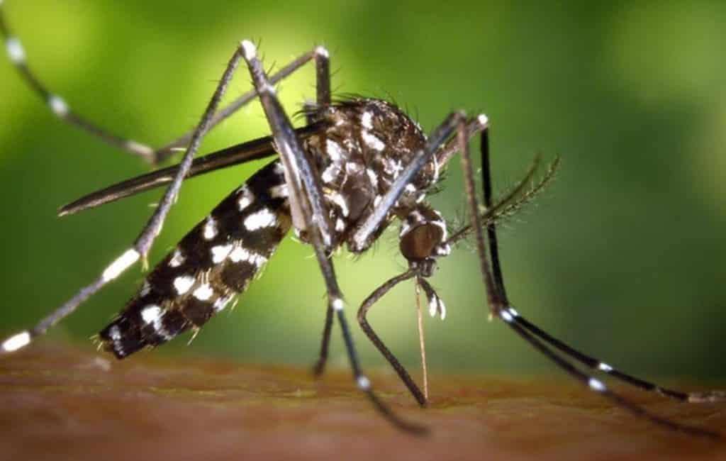 Kans op dengue en zika via muggen na overstromingen Alicante
