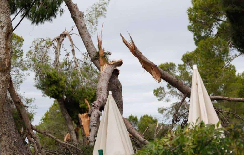 Duizenden bomen omgewaaid en ravage na de tornado op Ibiza