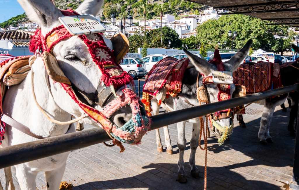 Geen personen van meer dan 80 kilo op ezel-taxi's in Mijas