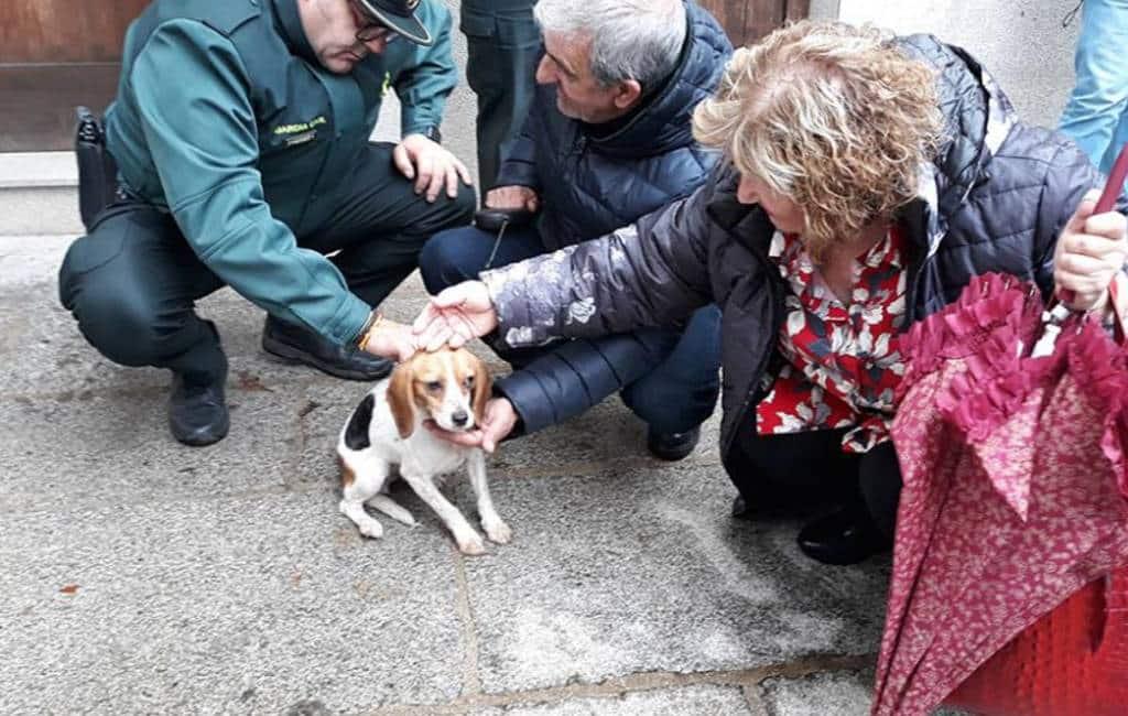 Brandweer redt na vier dagen hond van dak in León