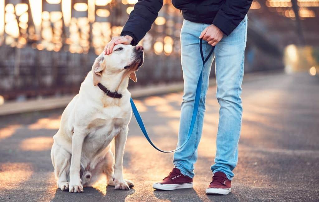 De meest voorkomende hondennamen in Spanje in 2019
