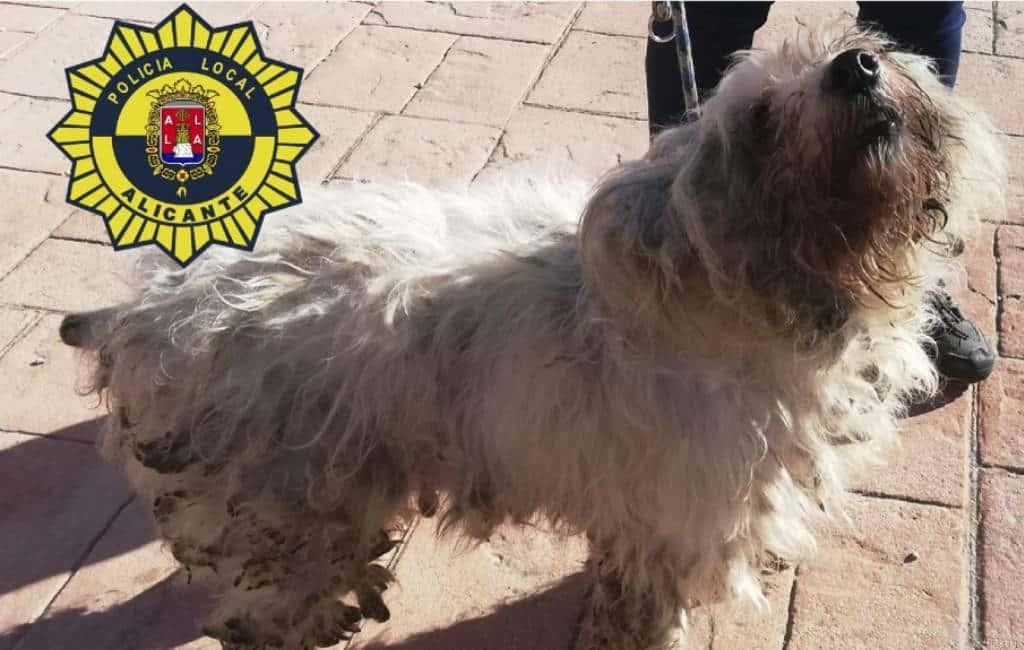 36 honden uit 50 m2 kleine flat gered in Alicante