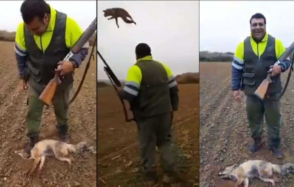 4.000 euro boete voor jager die vos heeft gemarteld en gedood in Huesca