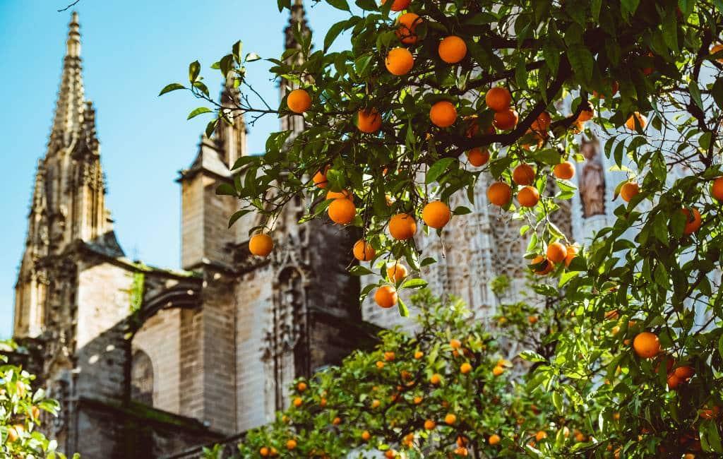 Sinaasappels leveren elektriciteit in Sevilla