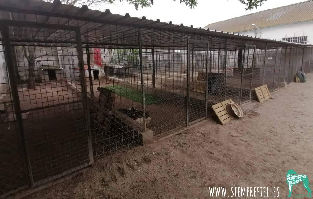 Ongekend in Spanje: Dierenasiel heeft geen honden meer
